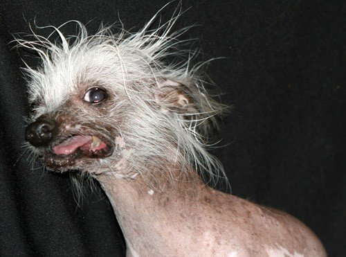Ugly Pictures Of Dogs Downloads