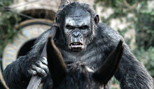 Apes 10
