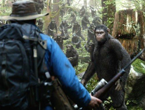 Apes 12